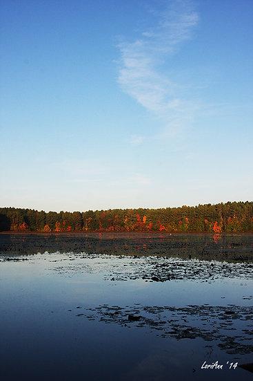 Sunrise Foliage - Delaney WMA