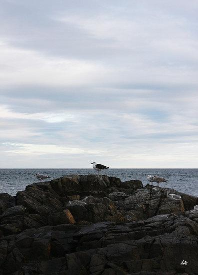 Seabrook Gulls