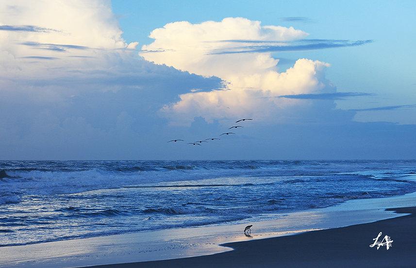Beach Birds at Dawn 1