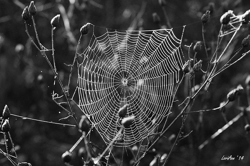 Dewy Morning Web