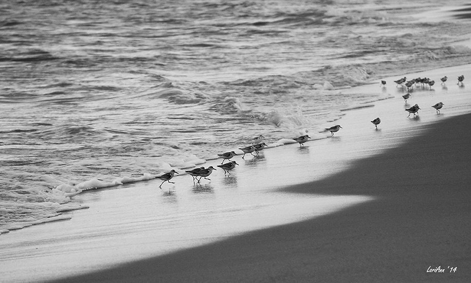 Chasing Sandpipers