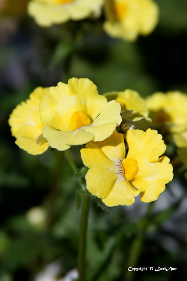Potted - Yellow