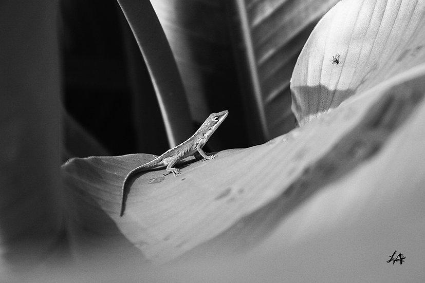Lizard Sees Fly