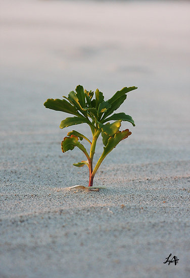 Solitary in the Sand