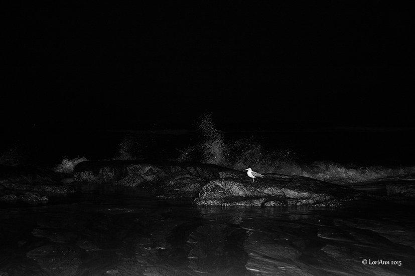 Gull in the Dark