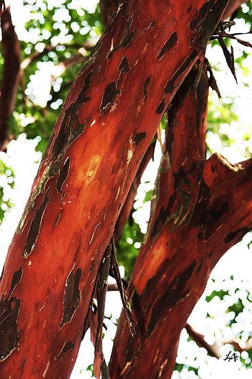 Abstract Nature - Mottled Bark