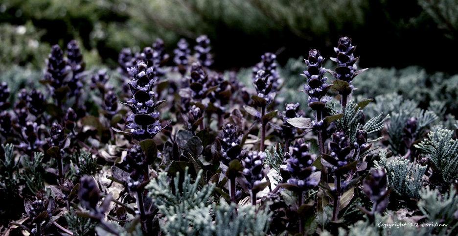 Subtle Purple