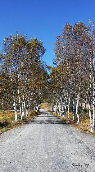 Country Road - N.B.