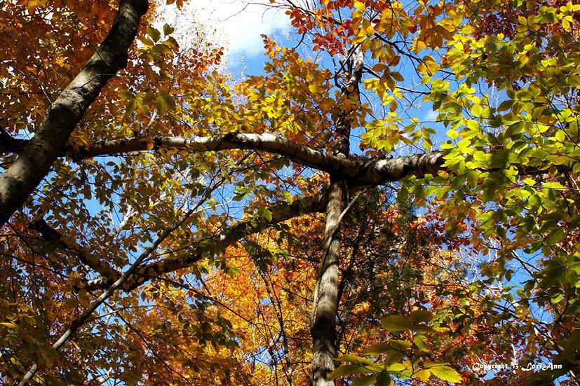 Intersecting Foliage 1