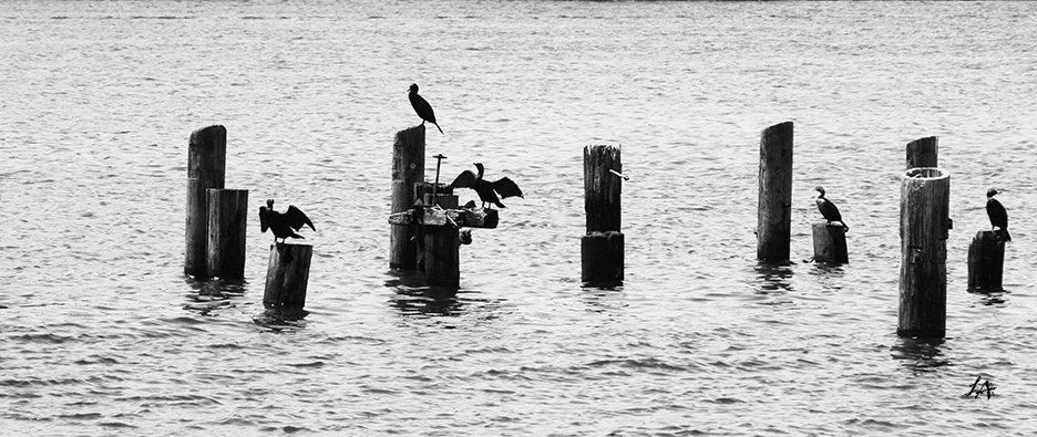 Boston Harbor Birds