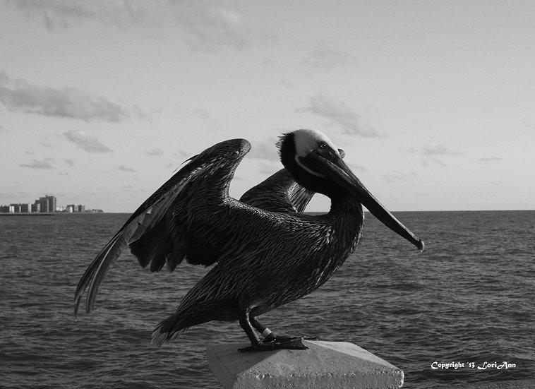 Pier Pelican 2