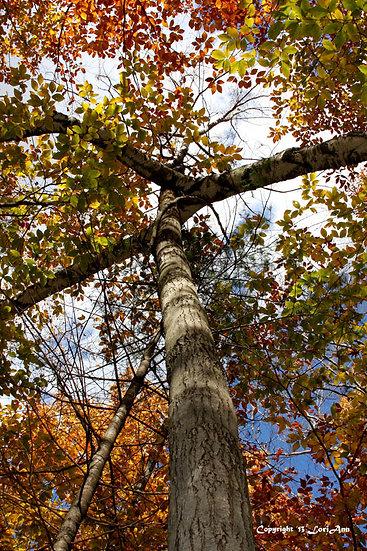 Intersecting Foliage 2