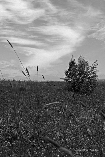 Pasture View