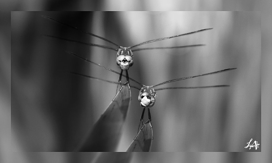 Dragonfly DoubleTake