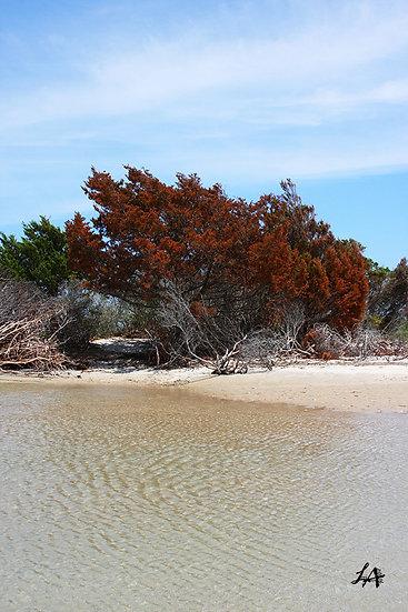 Island Vegetation 2