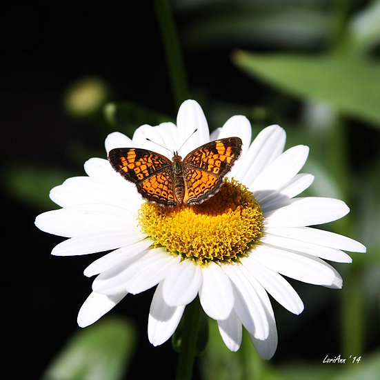 Resting on a Bright Daisy