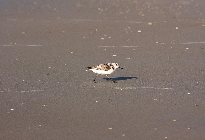 Peep on the Beach