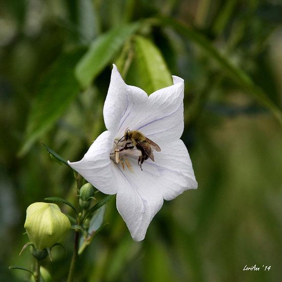 Bee Pollination 1