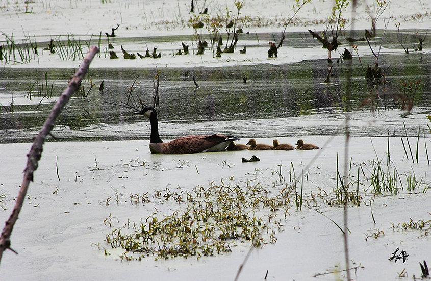 Family Swim at Oxbow 2