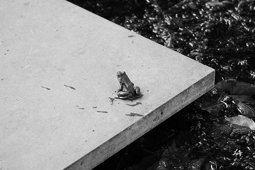 Sitting Stone