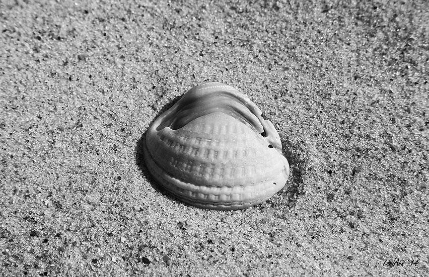 Sea Shell Oddity