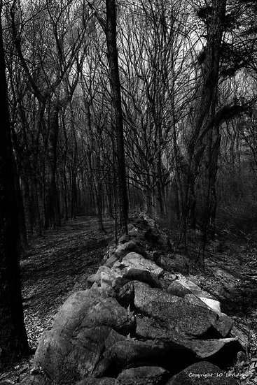Walls of the Woods