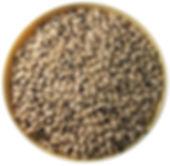 fazole černé oko