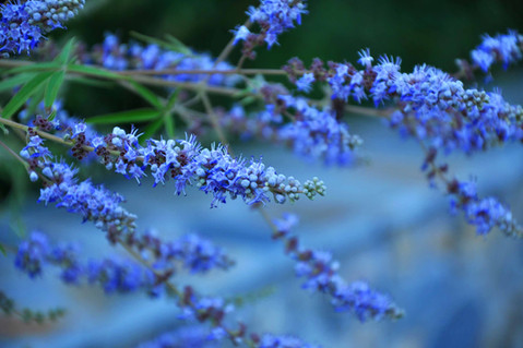abstract nature flowers copy.jpg