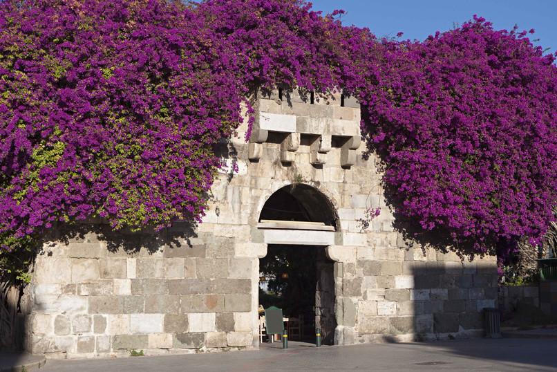 kos castle greece eastern aegean flowers
