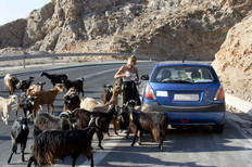 goats road trip person greece mainland c