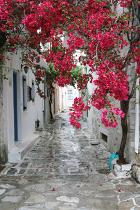 alley greece island cyclades flower aege