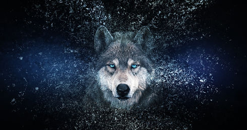 Wolf wallpaper with decay effect, .jpg