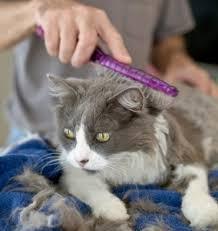 cat groom.jpg