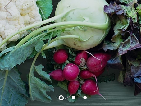 Shop for Groceries online