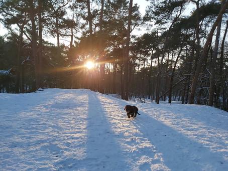 Markus Anecdotes - Roxy the snow dog, it's a dog's life