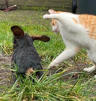 Markus Anecdotes - My dog, the cat. The cat, my dog.