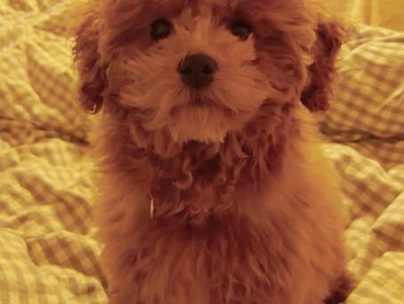 Markus Anecdotes - The Cute Dog