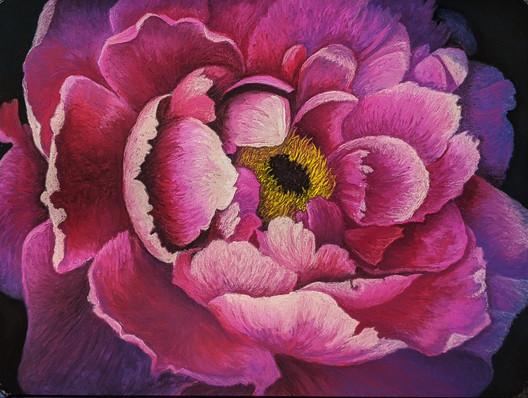 The Peony: A Poem in Petals--Susanne Larkham