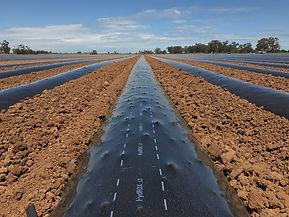 Solar Shrink1.jpg