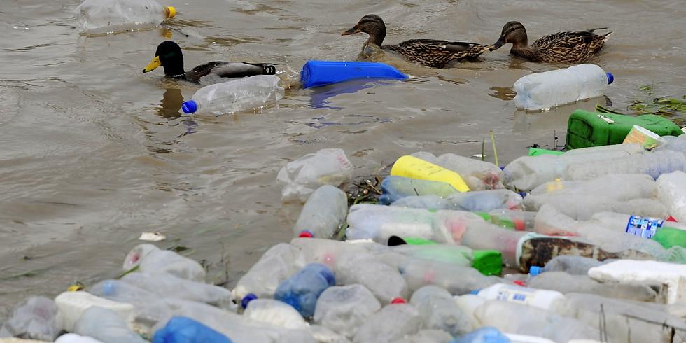 Litter Clean Up!
