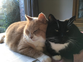 de katten.JPG