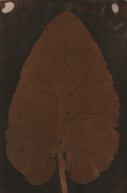 "Sarah Anne Bright — The ""Quillian Leaf"", 1839"