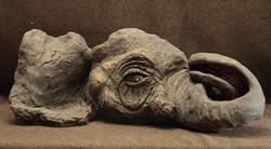 elephants-eye
