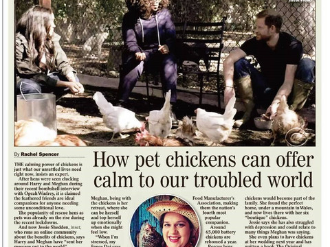 How pet chickens can offer calm to our troubled world - Daily Express