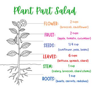 Plant Part Salad