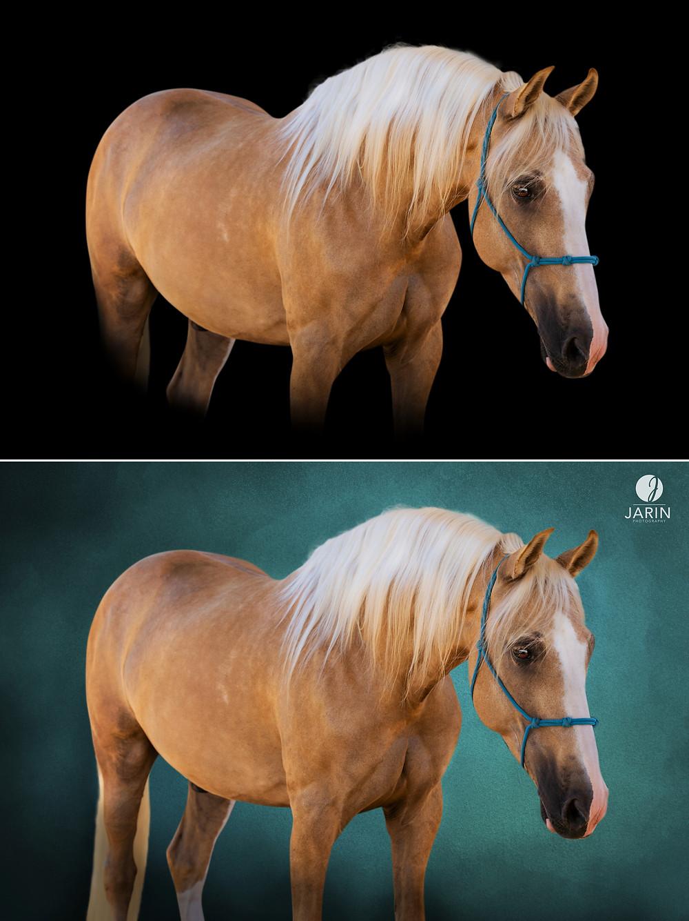 Horse black background photo