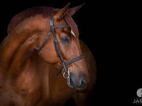 Behind the Scenes | Equine Black Background | Temecula, CA