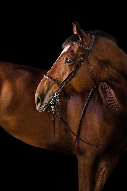 Del Mar Black Background horse photos