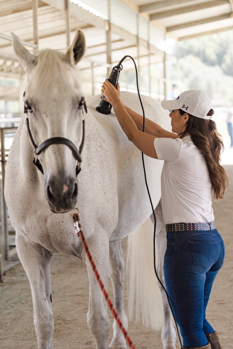 North County Equine Massage-053.jpg
