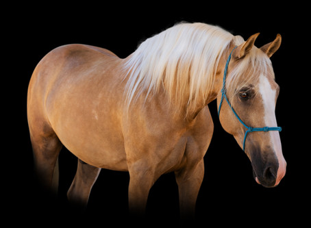 Equine Black Background Session | Lakeside, Ca